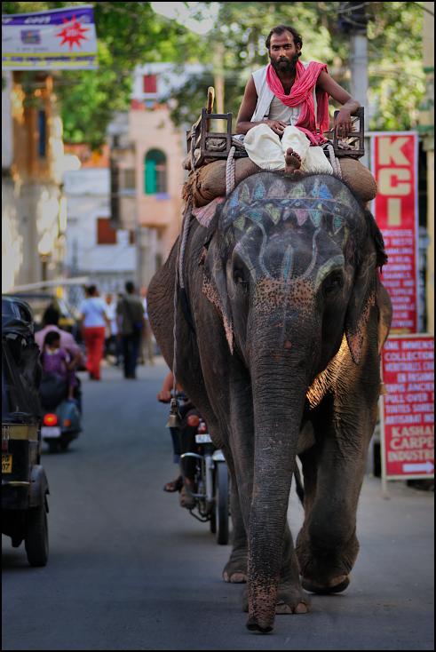 Jazda słoniu Ulice Nikon D300 Zoom-Nikkor 80-200mm f/2.8D Indie 0 słonie i mamuty słoń słoń indyjski ssak kręgowiec Droga ulica samochód świątynia pojazd