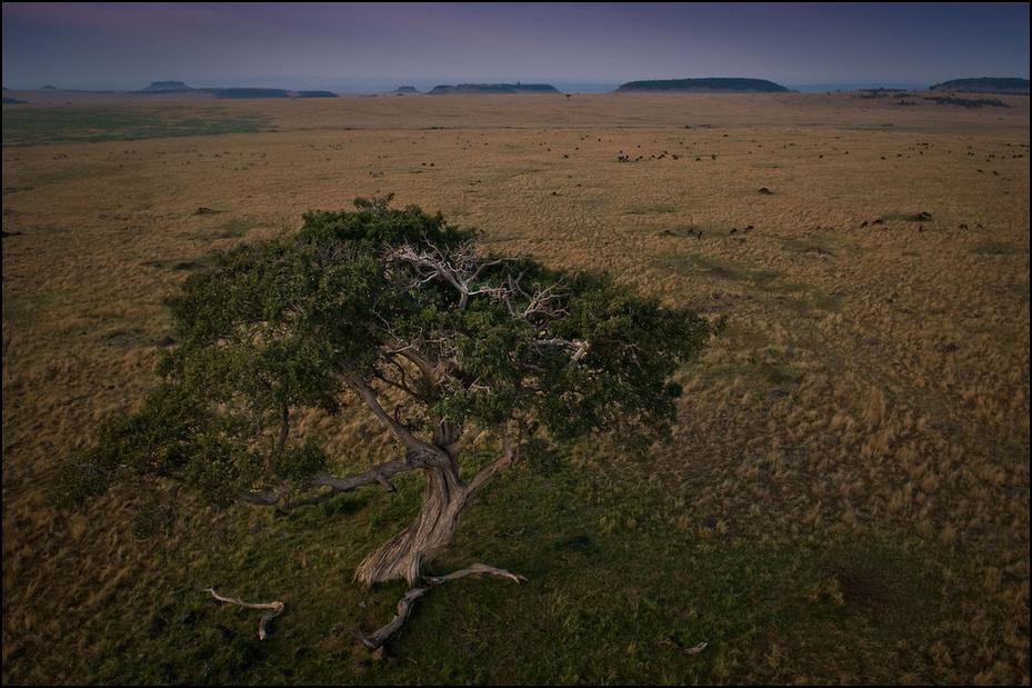 Drzewo życia Balon Nikon D300 AF-S Zoom-Nikkor 17-55mm f/2.8G IF-ED Kenia 0 ekosystem sawanna wegetacja krzewy pustynia łąka niebo Równina ecoregion step