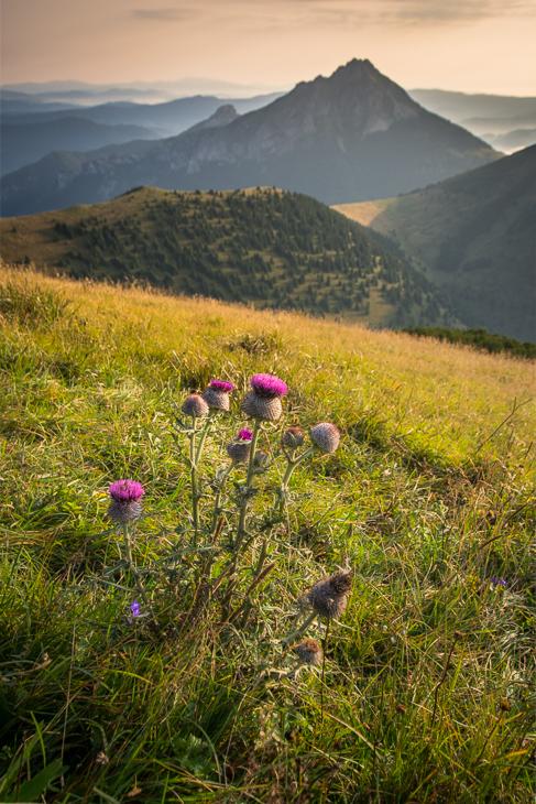 Mała Fatra 0 Mala Nikon D7200 Sigma 10-20mm f/3.5 HSM dziki kwiat górzyste formy terenu kwiat ekosystem pustynia Góra niebo łąka pole