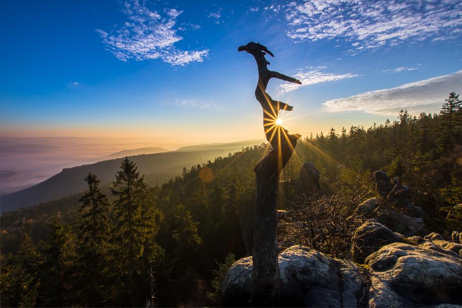 Szczeliniec Wielki 0 Nikon D7200 Sigma 10-20mm f/3.5 HSM Natura górzyste formy terenu niebo Góra drzewo pustynia roślina drzewiasta Park Narodowy Chmura ranek