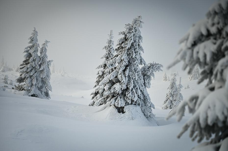 Śnieżka 0 Karkonosze Nikon Laowa D-Dreamer 12mm f/2.8 śnieg zimowy drzewo biały Natura zamrażanie Zjawisko atmosferyczne mróz gałąź Czarny i biały
