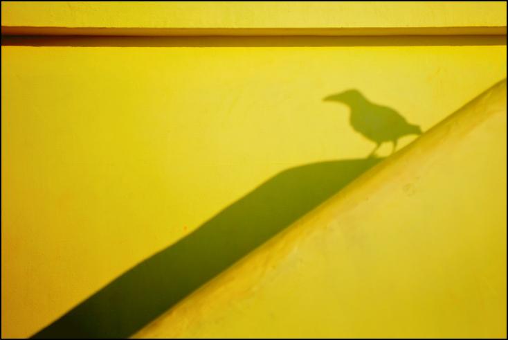 Wrona orientalna Ulice Nikon D300 Zoom-Nikkor 80-200mm f/2.8D Indie 0 Zielony żółty liść linia kąt fotografia makro trawa