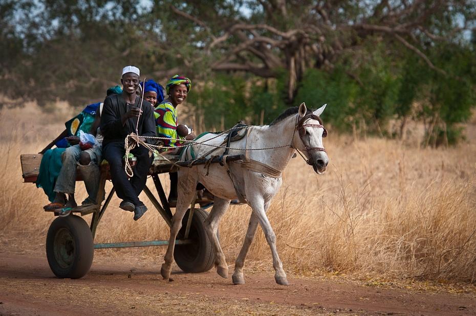 Dwukółka Senegal Nikon D300 AF-S Nikkor 70-200mm f/2.8G Budapeszt Bamako 0 uprząż konia koń jak ssak juczne zwierzę drzewo koń obszar wiejski wózek roślina rydwan wyścigi rydwanów