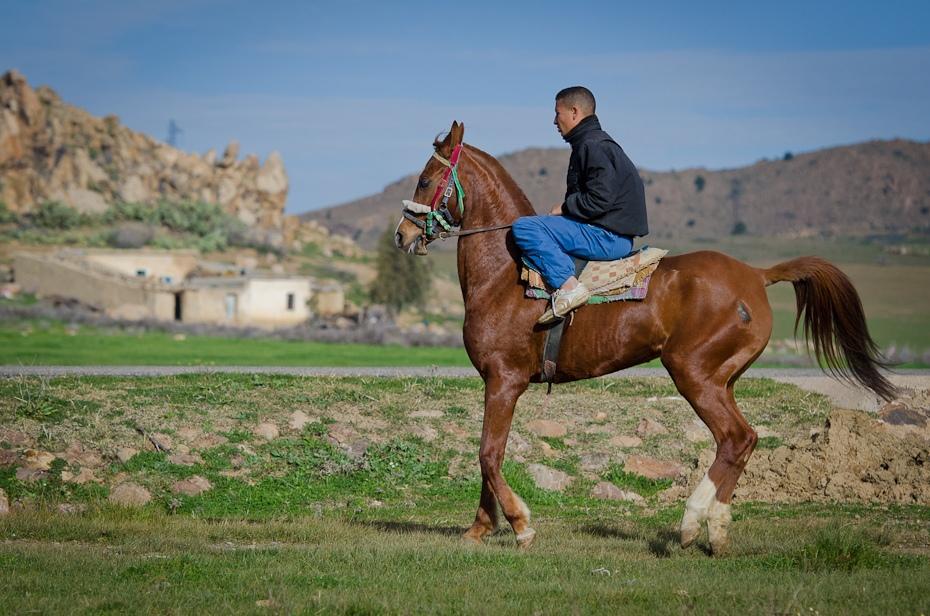 Jeździec Maroko Nikon D7000 AF-S Nikkor 70-200mm f/2.8G Budapeszt Bamako 0 koń ekosystem łąka jazda na szlaku koń jak ssak step klacz pastwisko wodza Jeździectwo