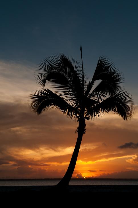 Zanzibarska Plaża Krajobraz Nikon D300 AF-S Zoom-Nikkor 17-55mm f/2.8G IF-ED Zanzibar 0 niebo zachód słońca drzewo palmowe Arecales roślina drzewiasta drzewo wschód słońca zmierzch atmosfera ziemi horyzont