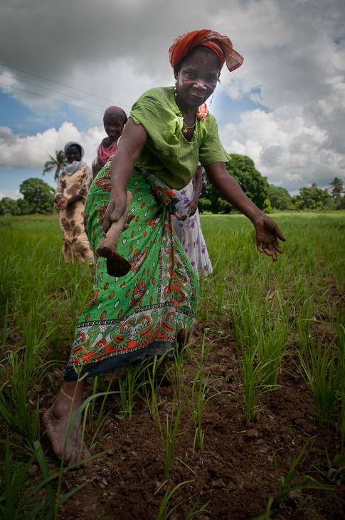 Plantacja ryżu Ludzie Nikon D300 AF-S Zoom-Nikkor 17-55mm f/2.8G IF-ED Zanzibar 0 trawa roślina rolnictwo pole obszar wiejski gleba drzewo przyciąć dziewczyna rodzina traw