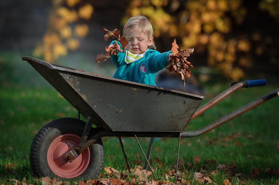 Pomoc ogrodzie Kaja Nikon D7000 AF-S Nikkor 70-200mm f/2.8G liść taczka wózek roślina trawa zabawa dziecko pojazd drzewo Brzdąc