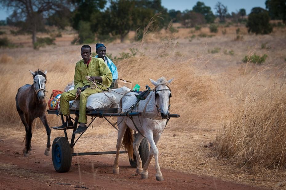 Dwukółka Senegal Nikon D300 AF-S Nikkor 70-200mm f/2.8G Budapeszt Bamako 0 rodzaj transportu juczne zwierzę obszar wiejski pole rolnictwo krajobraz drzewo piasek gleba wózek