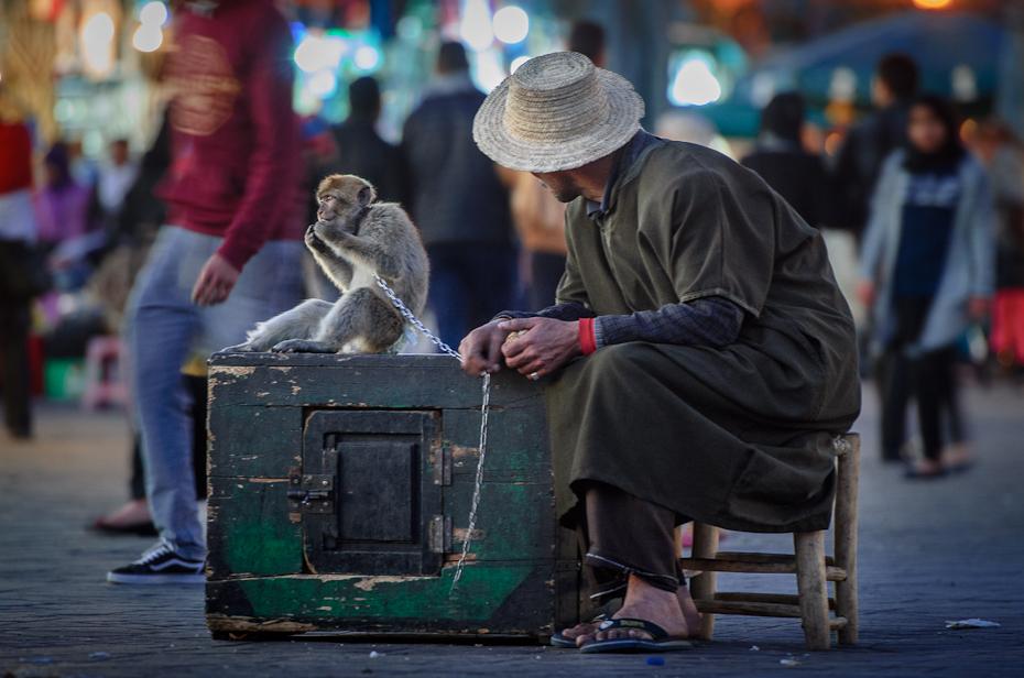 Treser małp Marrakesz Nikon D7000 AF-S Nikkor 70-200mm f/2.8G Maroko 0 człowiek infrastruktura miejsce publiczne ulica męski Droga migawka posiedzenie ludzkie zachowanie