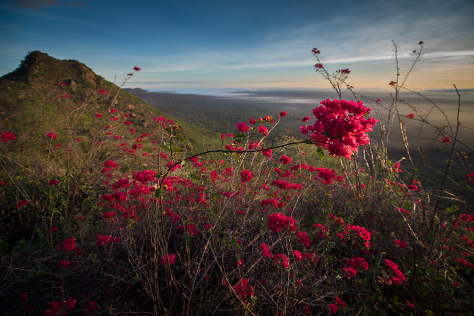 Tsavo West Krajobraz nikon d750 Nikon AF-S Nikkor 14-24mm f/2.8G Kenia 0 Natura niebo wegetacja dziki kwiat kwiat ekosystem liść Góra flora ranek