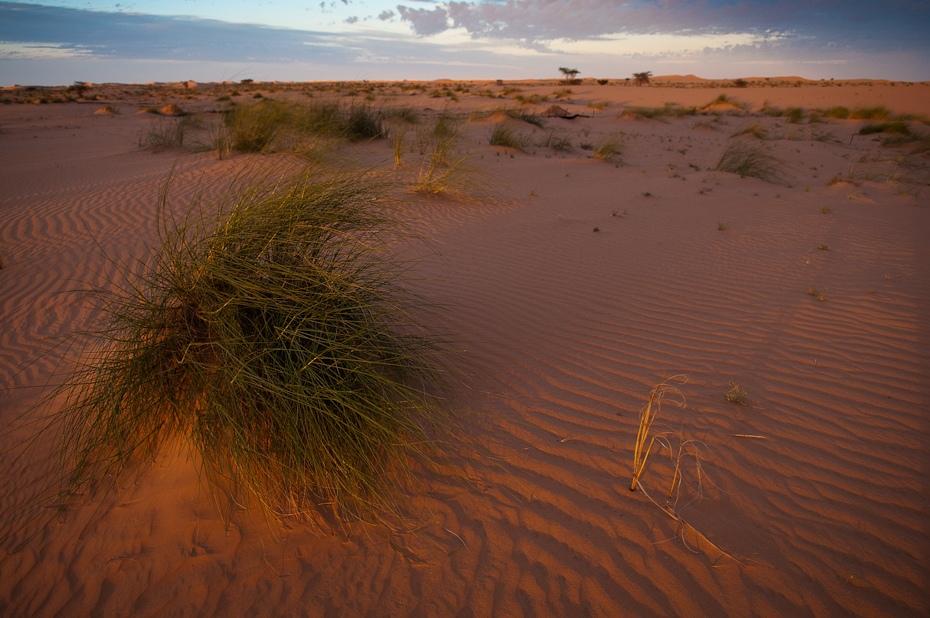 Sahara Mauretania Nikon D300 AF-S Zoom-Nikkor 17-55mm f/2.8G IF-ED Budapeszt Bamako 0 erg piasek eoliczny krajobraz ekosystem pustynia wydma krajobraz sahara ecoregion niebo