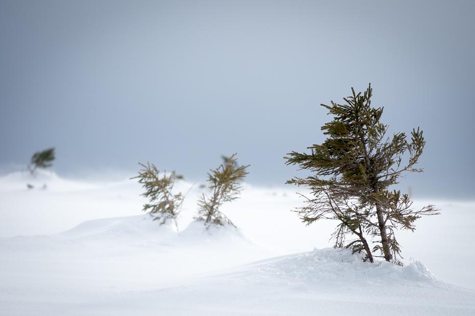 Zima Karkonosze Nikon D7200 Nikkor AF-S 70-200 f/4.0G śnieg zimowy niebo drzewo zamrażanie mróz rodzina sosnowa jodła Góra drzewo iglaste