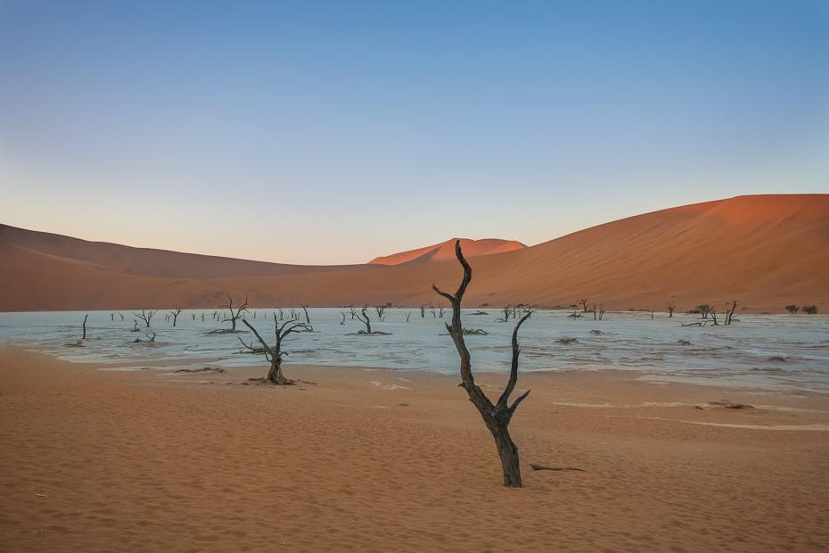 Deadvlei Krajobraz Nikon D7100 Sigma 10-20mm f/3.5 HSM Namibia 0 niebo piasek wydma erg eoliczny krajobraz śpiewający piasek pustynia horyzont krajobraz sahara