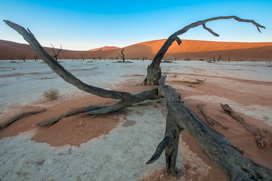 Deadvlei Krajobraz Nikon D7100 Sigma 10-20mm f/3.5 HSM Namibia 0 morze Wybrzeże niebo drewno piasek horyzont driftwood drzewo woda