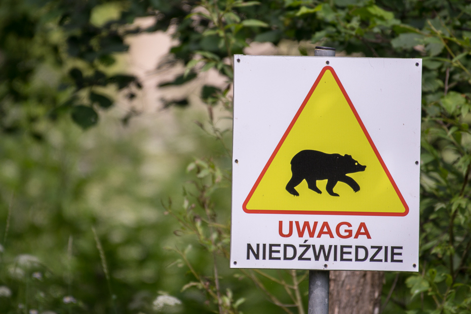 Uwaga niedźwiedzie 0 Lipiec Nikon D7100 NIKKOR 200-500mm f/5.6E AF-S Biesczaty znak fauna znak drogowy oznakowanie trawa drzewo