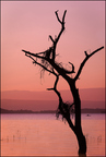 Jezioro Baringo rankiem