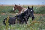 Konie w Puerto Natales