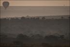 Masai Mara o świcie