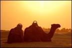 Wielbłądy|escape