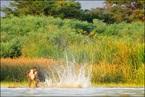 Rybak na jeziorze Chamo|escape