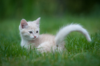 Na trawie