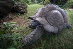Żółw|escape