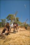 Rolnicy Dorze