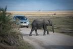 Słoń przechodzący przez drogę