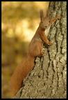 Wiewiórka #2 escape