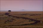 Masai Mara rano