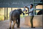 Karmienie słonika|escape