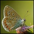 Motyl #2