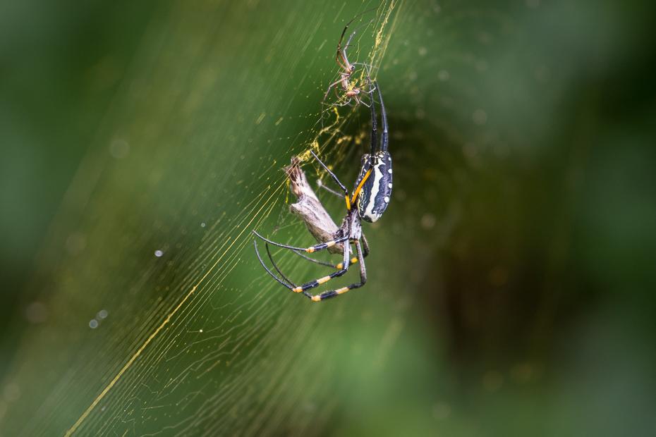 Pająk Ptaki Nikon D7200 NIKKOR 200-500mm f/5.6E AF-S Namibia 0 ekosystem pająk pajęczak fotografia makro bezkręgowy orb pająk tkacz atmosfera ziemi araneus stawonogi pajęcza sieć