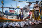Układanie ryb